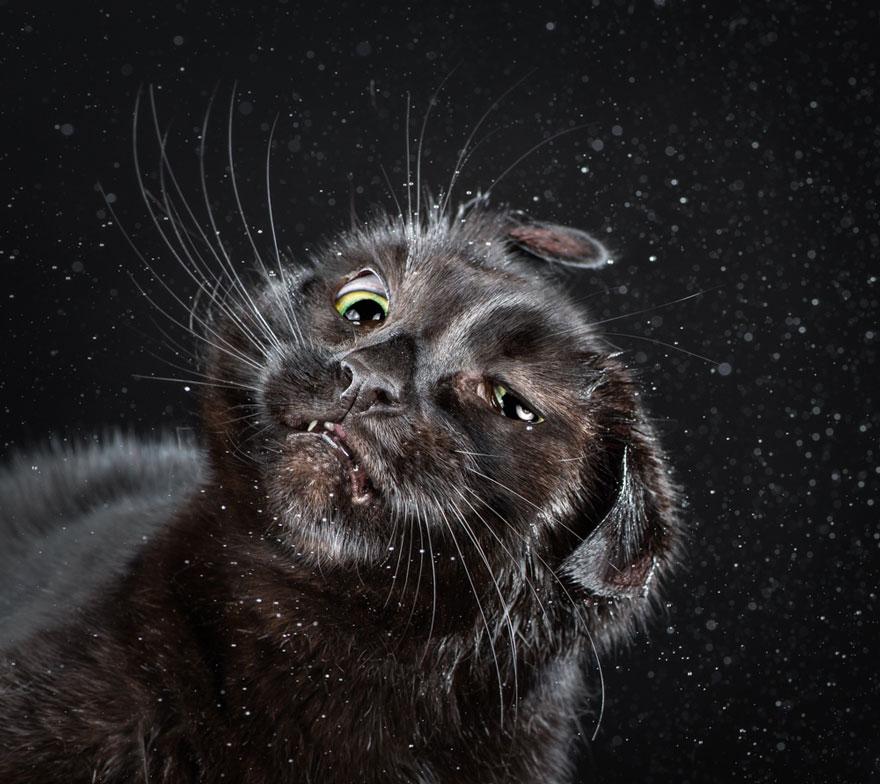 shake-shaking-cats-carli-davidson-10